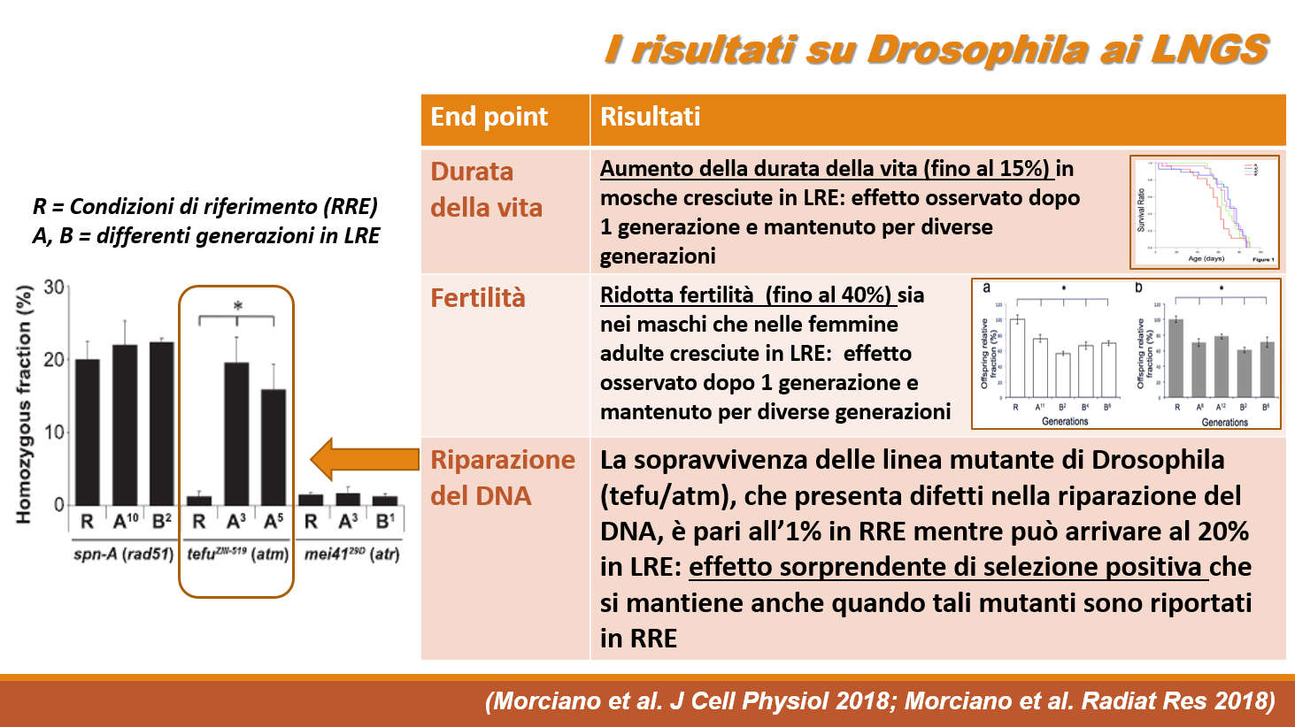 FIG 2 ita new